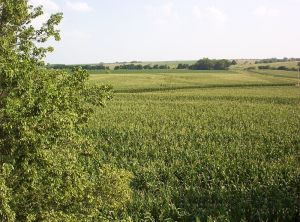 Corn_fields_in_Southern_Nebraska