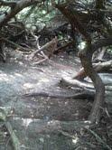 Pioneer Park hobbit hole