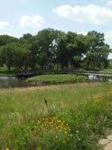 Pioneer Park island