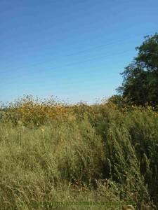 Spring Creek Prairie