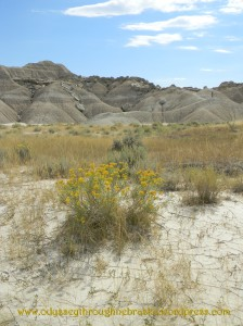 toadstool landscape