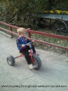 Pumpkin Patch tricycle