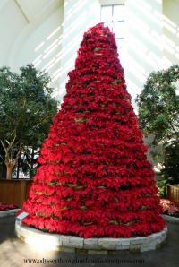 Lauritzen Gardens Poinsettia Tree