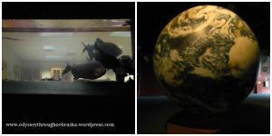 Back 2 Bible globe & fish