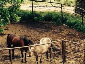 Barn Horses text 6-14